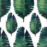热带逗人喜爱的可爱的美妙的夏威夷花卉草本夏天绿色棕榈叶水彩手例证 皇族释放例证