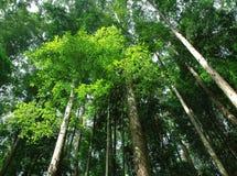 热带阳光的结构树 免版税库存照片