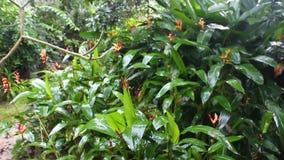 热带雨在庭院里 股票录像