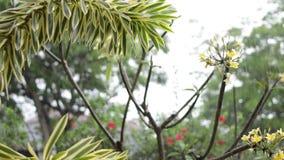 热带雨在户外庭院里 异乎寻常的绿色和灰色背景 巴厘岛,下雨季节 印度尼西亚 影视素材