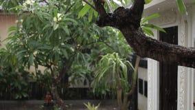 热带雨在户外庭院里 异乎寻常的绿色和灰色背景 巴厘岛,下雨季节 印度尼西亚 股票视频