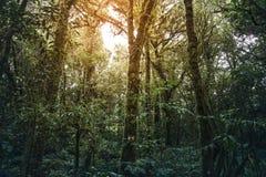 热带雨林土井Inthanon国家公园 免版税库存照片