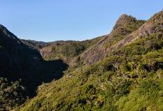 热带雨林在新西兰 免版税库存照片
