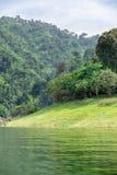 热带雨林在泰国的中部, 库存图片