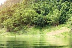 热带雨林在泰国的中部, 免版税库存图片