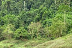热带雨林在泰国的中部, 免版税图库摄影