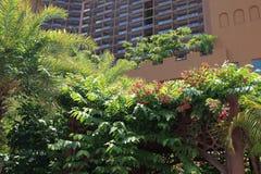 热带雨林手段 免版税图库摄影