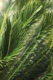 热带雨林树叶子 免版税图库摄影
