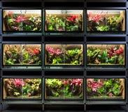 热带雨林玻璃容器或宠物生态动物园机架 库存照片