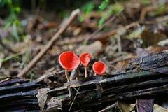 热带雨林蘑菇,桃红色烧伤杯子 库存图片