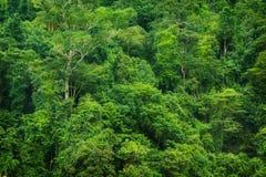 热带雨林视图 库存图片