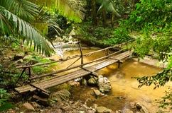 热带雨林 图库摄影
