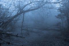 热带雾的森林 库存照片