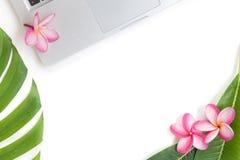 热带顶视图夏天植物的概念静物画膝上型计算机fra 免版税库存图片