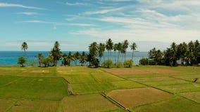 热带风景、米领域和海卡米金省,菲律宾 影视素材
