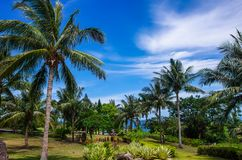 热带风景在台湾 库存照片
