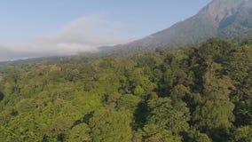 热带风景雨林和山 股票录像