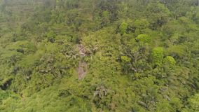 热带风景雨林和山 影视素材