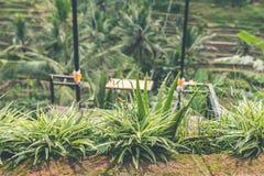 热带风景,巴厘岛,印度尼西亚 聚会所 图库摄影