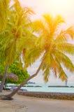 热带马尔代夫海滩 库存图片