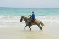 热带骑士的天堂 免版税库存照片
