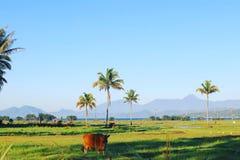 热带高地 免版税库存图片