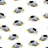 热带鱼传染媒介无缝的样式 免版税库存图片