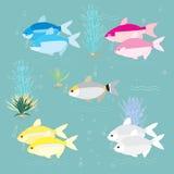热带鱼例证 免版税库存照片
