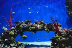 热带鱼和珊瑚在水族馆 免版税库存图片