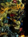 热带鱼和珊瑚 库存照片