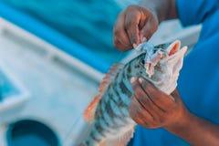热带鱼和诱饵在日落 免版税库存图片