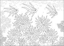 热带鱼和银莲花属 免版税库存照片