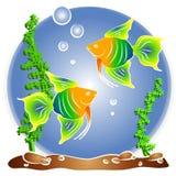 热带鱼水族馆Clipart 免版税库存照片