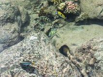 热带鱼池在洲际的手段和温泉旅馆在帕皮提,塔希提岛,法属玻里尼西亚 免版税图库摄影