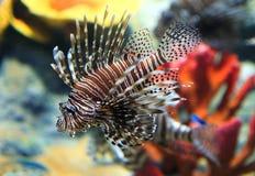 热带鱼的海运 免版税库存图片