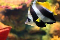 热带鱼的海运 免版税图库摄影