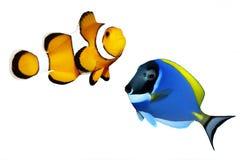 热带鱼的礁石 库存图片