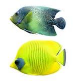 热带鱼的礁石 库存照片