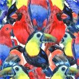 热带鸟上色了无缝的样式 免版税库存照片