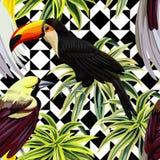 热带鸟和植物样式,几何背景 库存例证