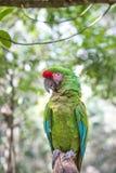热带鸟特写镜头 免版税库存照片