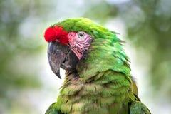 热带鸟特写镜头 库存图片