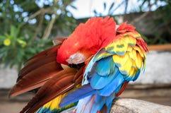 热带鸟特写镜头 免版税图库摄影