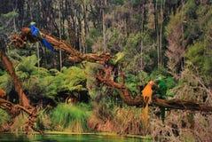 热带鸟的密林 免版税图库摄影