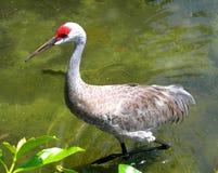 热带鸟走 免版税库存图片
