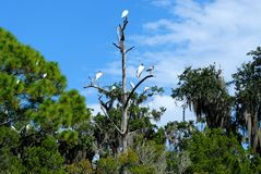 热带鸟,佛罗里达沼泽地 免版税库存照片