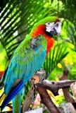 热带鸟 库存图片