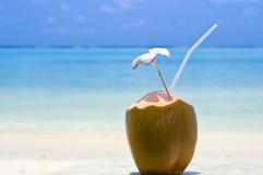 热带鸡尾酒的椰子 免版税库存照片