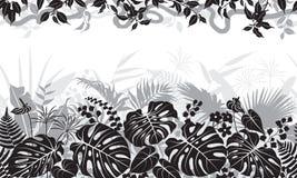 热带黑白样式 库存图片