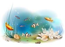 热带水下的世界 库存图片